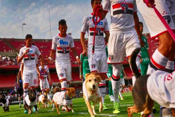 футболисты вышли с собаками на поле