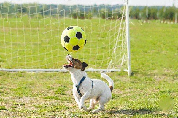 Собака жонглирует мяч